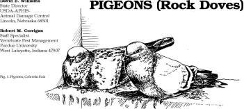 TUZAKLAR TUZAK ÇEŞİTLERİ Pigeons_img_0